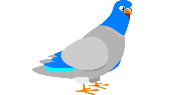 Суть HTTPS на примере почтовых голубей